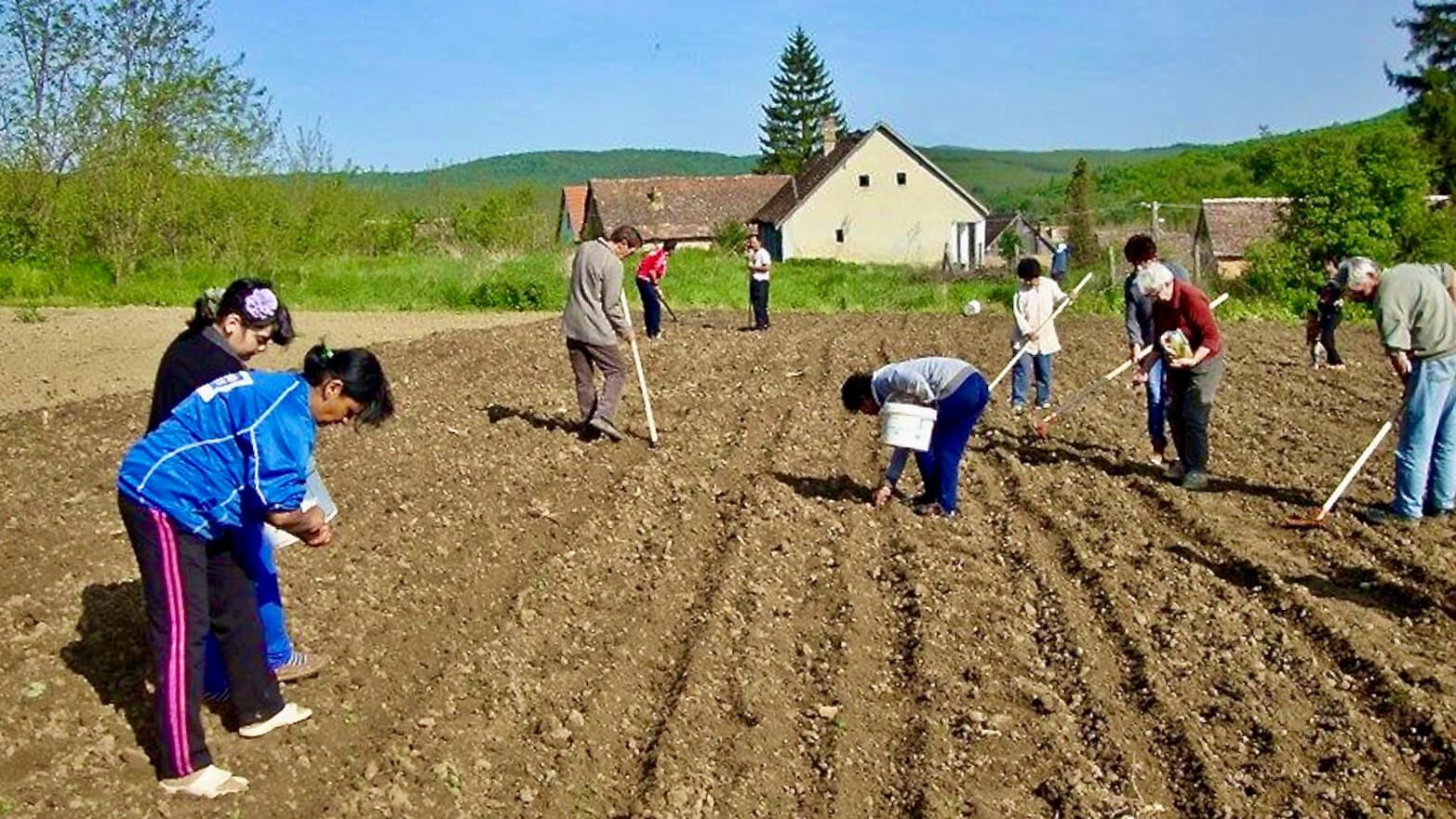 Roma in Ugarn bei der Feldarbeit